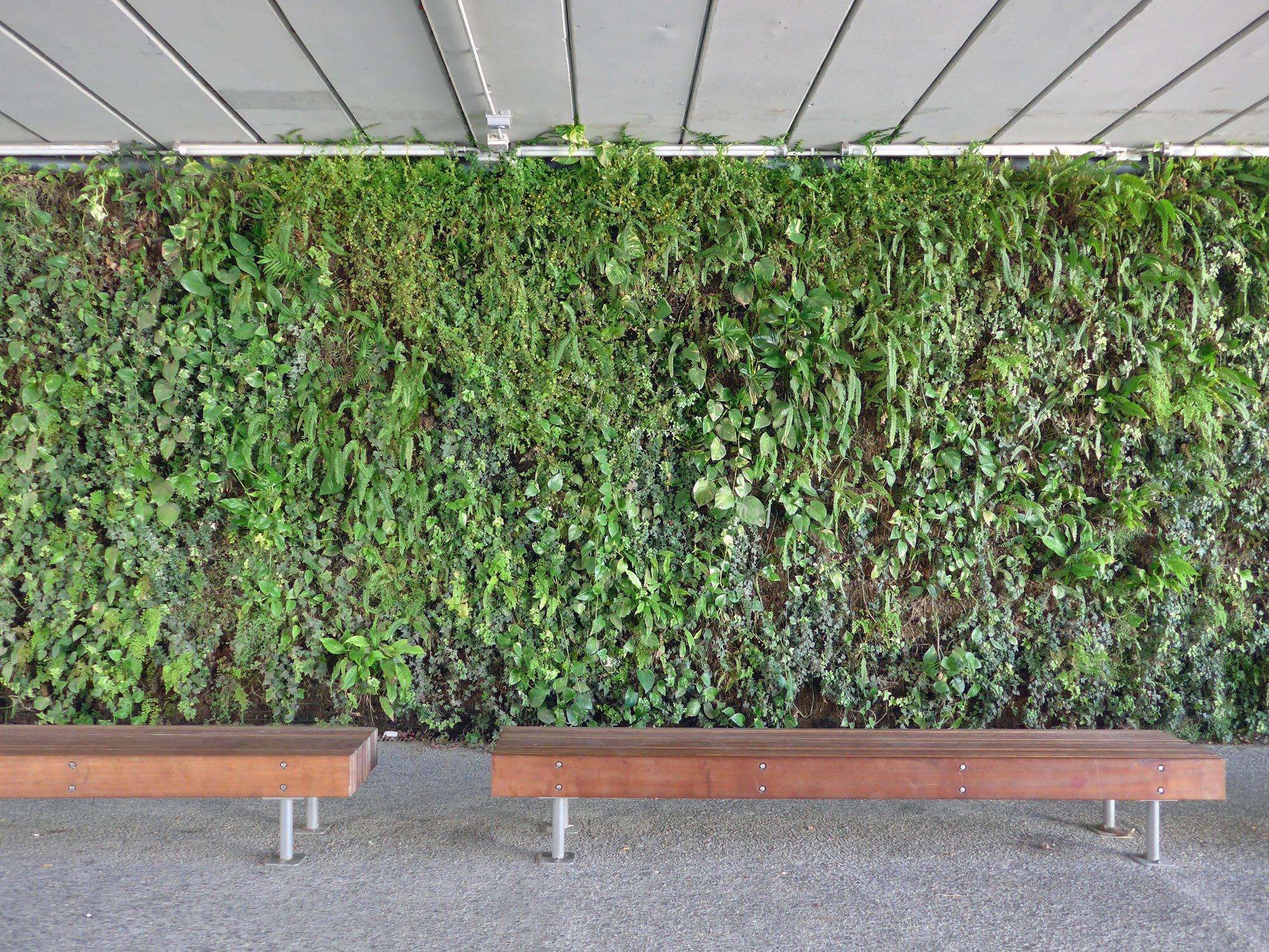 begrnte wand innen balkon ideen wand bepflanzen sitzbank holz sitzkissen with bepflanzte wand. Black Bedroom Furniture Sets. Home Design Ideas
