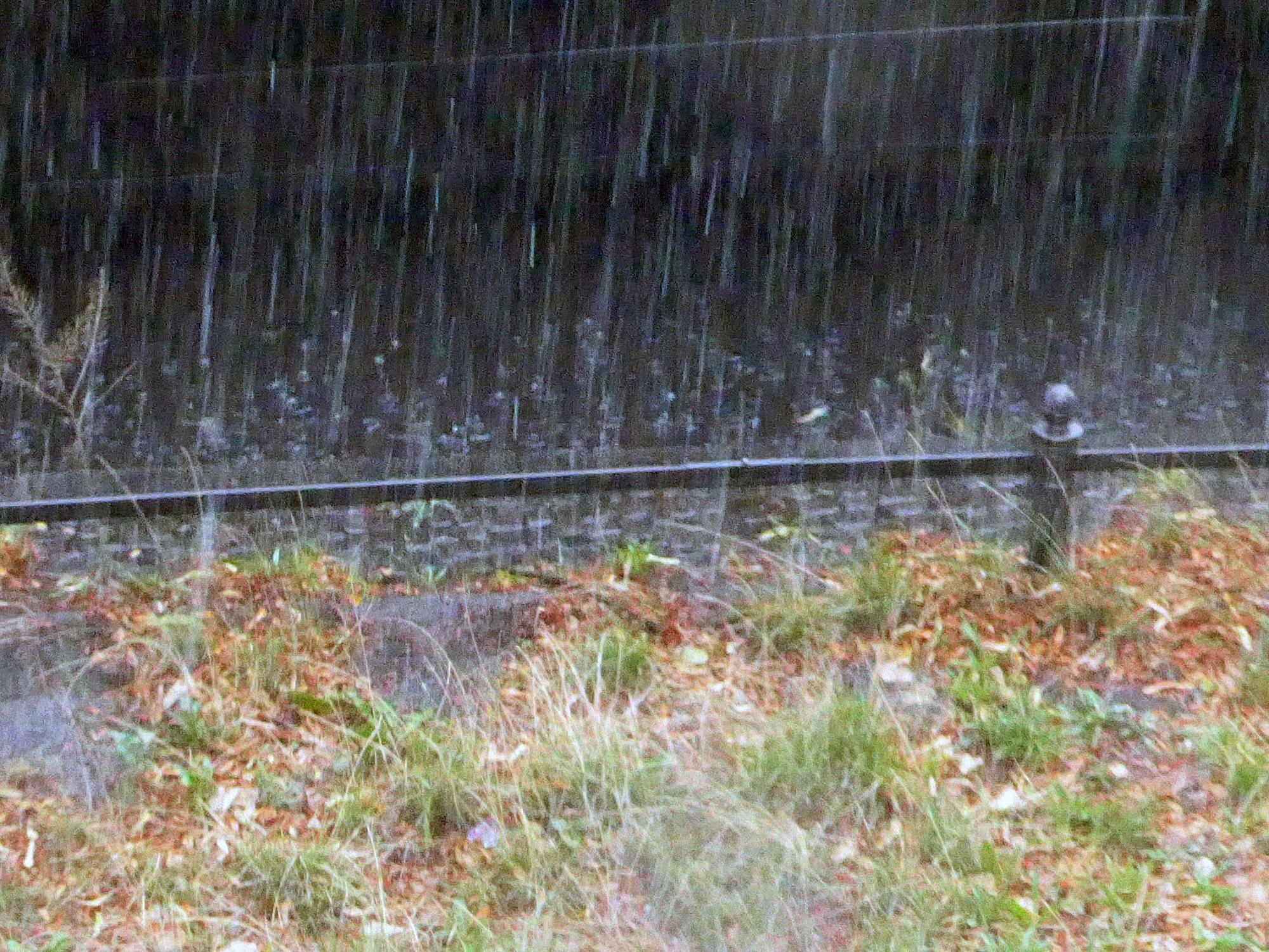 Favorit Nutzung und Versickerung von Niederschlagswasser | Flachdach ZW18