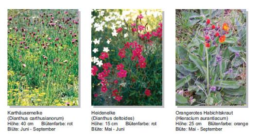 Auswahl Der Pflanzen | Flachdach | Gründächer | Baunetz_wissen Pflanzen Fur Dachbegrunung Dachgarten