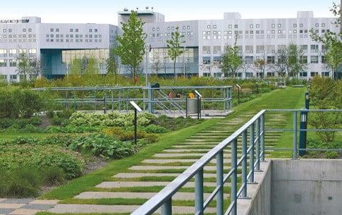 Dachbegrünung intensiv Rasenbereiche anlegen