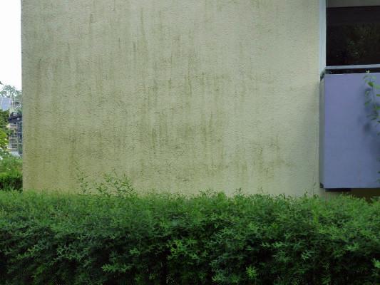 algen und pilzbefall auf wdvs altbau au enwand sanierung baunetz wissen. Black Bedroom Furniture Sets. Home Design Ideas