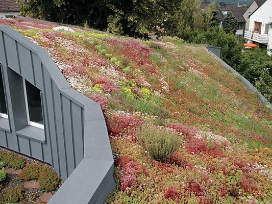 Sehr Metalldächer mit Begrünung   Flachdach   Gründächer   Baunetz_Wissen HH91