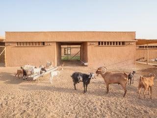 In Kombination mit dem Zentrum für tiergestützte Traumatherapie entsteht in Chamchamal im Nordirak auf einem über 35.000 Quadratmeter großen Gelände in mehreren Bauabschnitten ein Heilgarten.