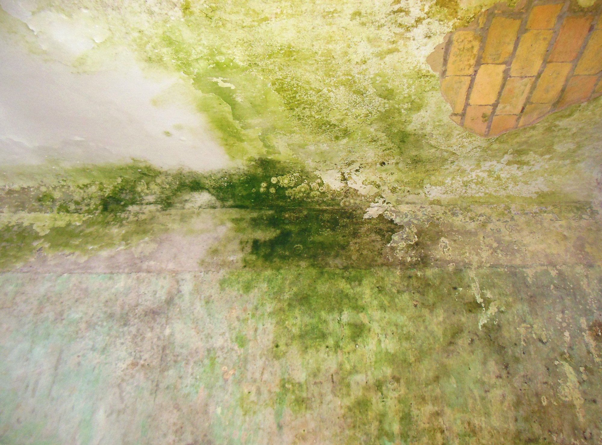 algen und pilze an fassaden mauerwerk bausch den m ngel baunetz wissen. Black Bedroom Furniture Sets. Home Design Ideas